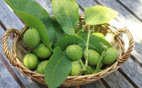 Зелёные орехи