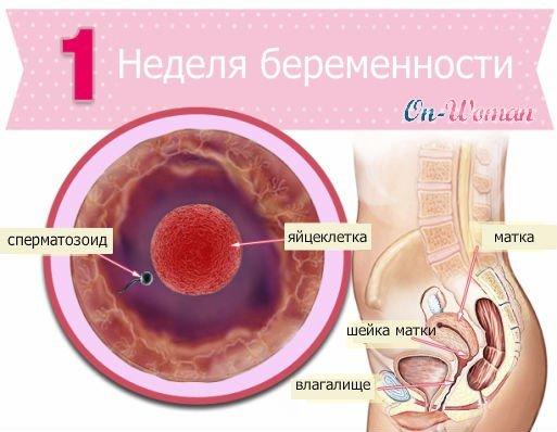 1 неделя беременности