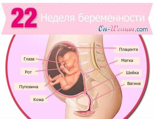 23 ytltkz thtvtyyjcnb секс