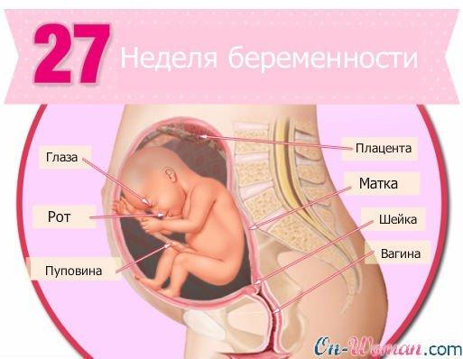 фото живота и ребенка
