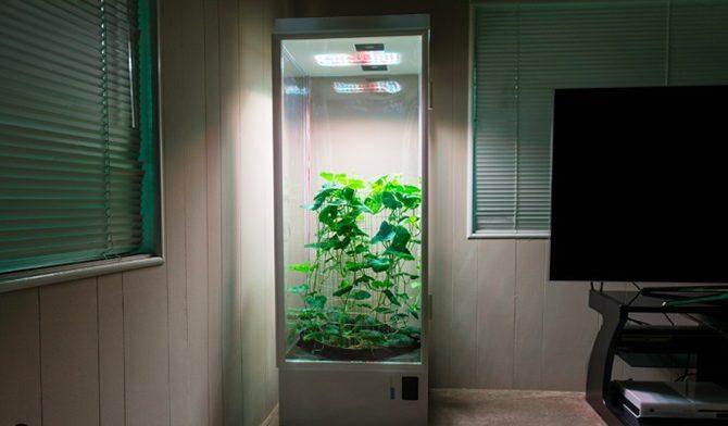 Гроубокс выращивание растений