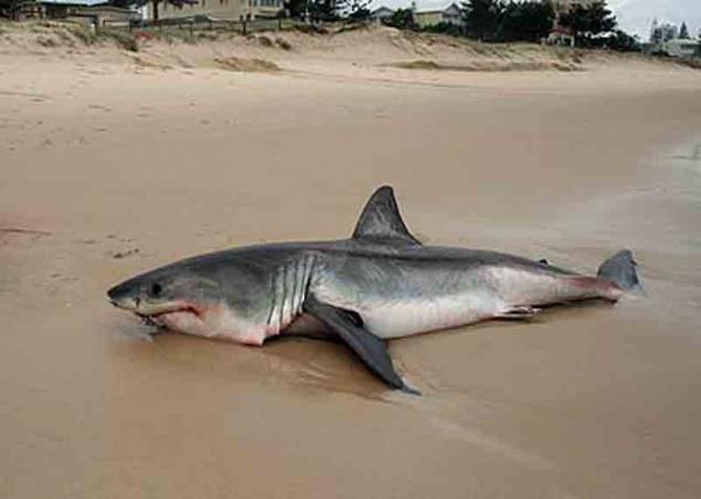 Акула на берегу водоёма