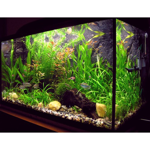 Аквариум на 500 литров с водорослями