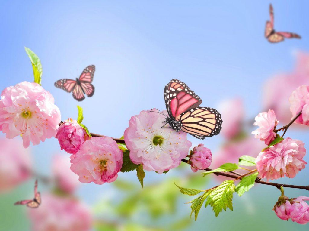 Сонник бабочка к чему снится бабочка во сне