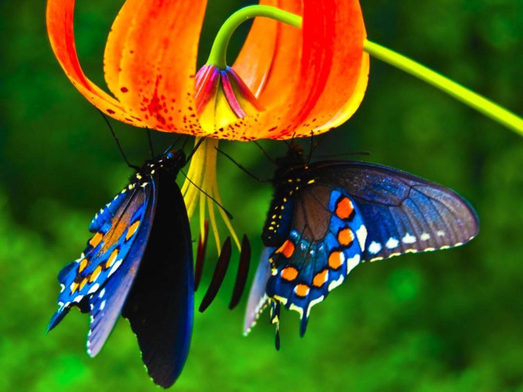 Бабочки пьют нектар