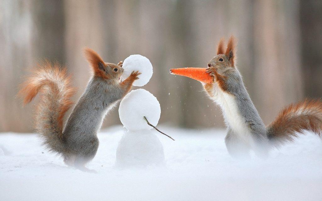 Белки лепят снеговика
