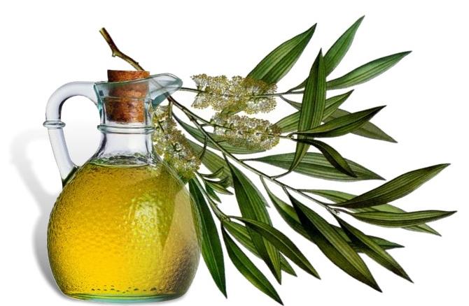 отбеливание маслом чайного дерева