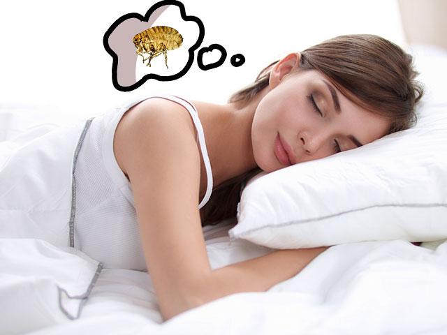 Девушке снится блоха