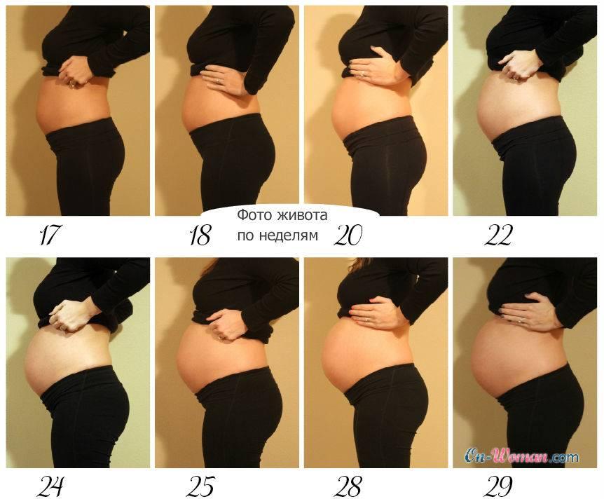 Живот беременной по неделям в картинка