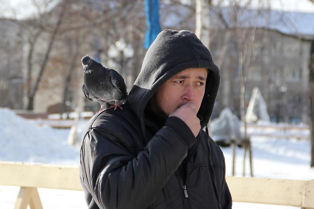 Голубь сидит на плече мужчины
