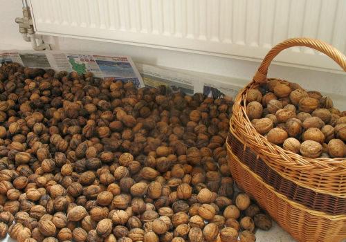 Грецкие орехи на хранении