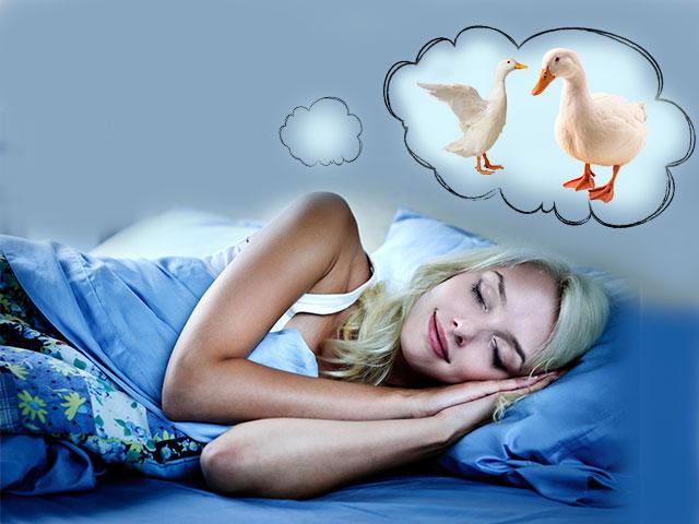 Гуси во сне