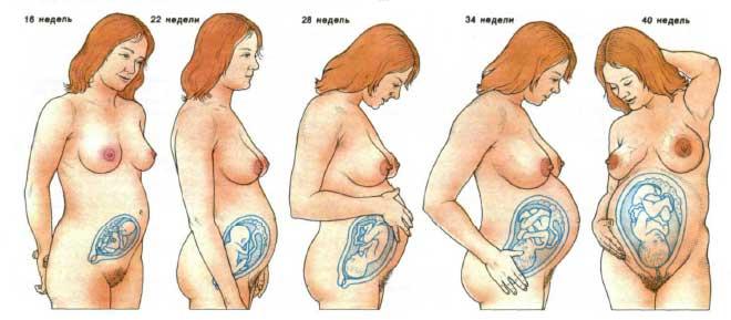у беременных