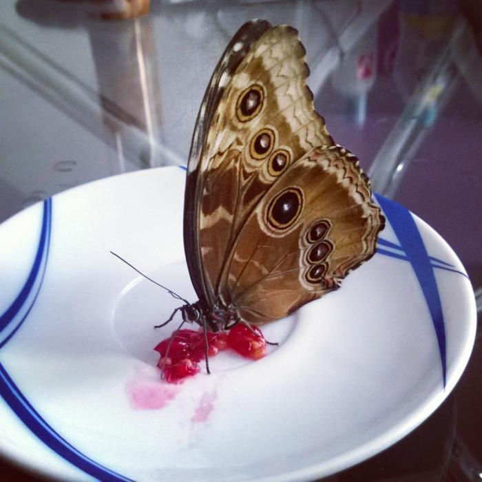 Кормить бабочку