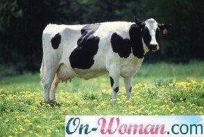 чем опасно коровье молоко