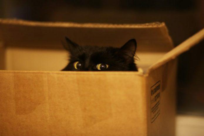 Почему-то кошка прячется в коробке