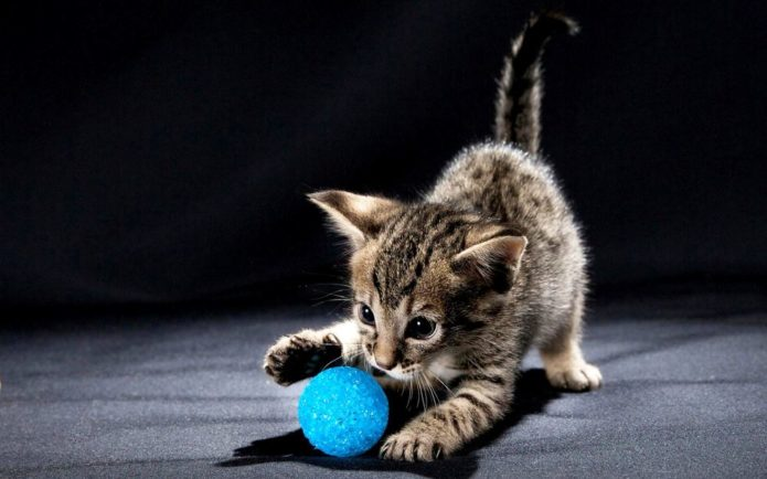 кошка с мячиком