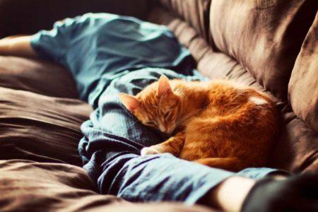 Возможно ли приучить кота спать с хозяином