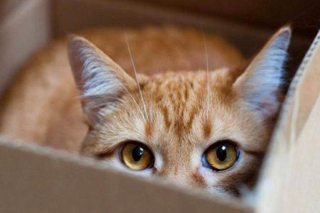 Аномальная тяга: почему кошки так любят коробки и пакеты