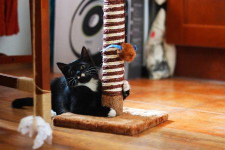 Действенные способы приучить кота к когтеточке