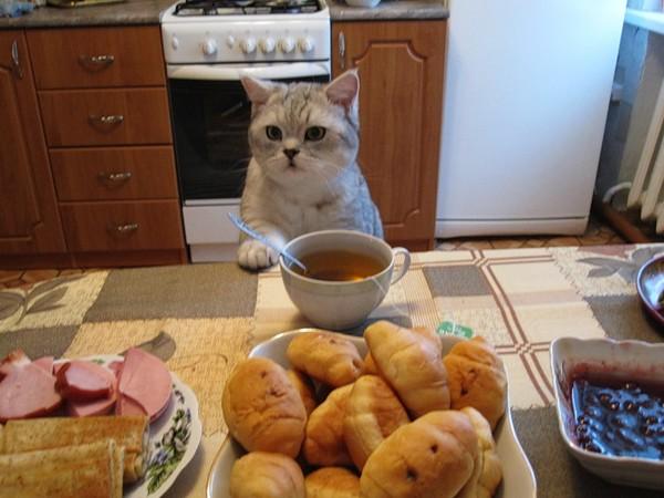 кот с пирожками