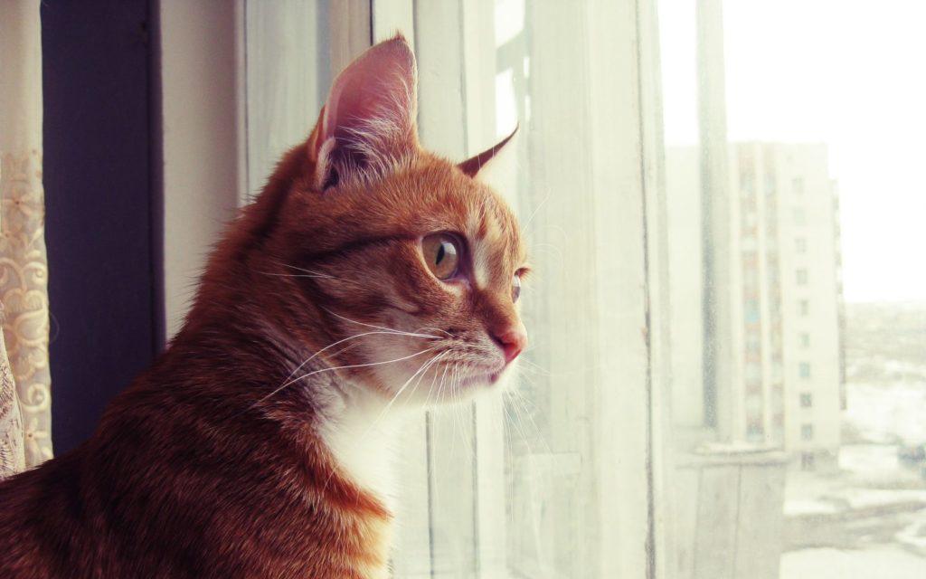 Кот возле окна