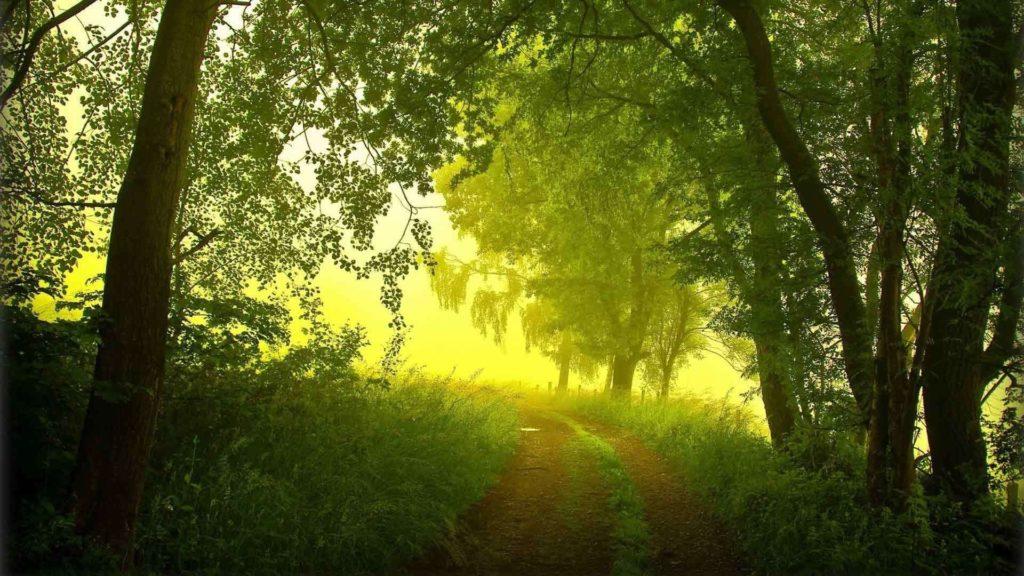 Летний туман, тропинка, деревья, солнце пробивается