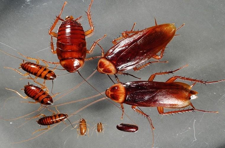 Маленькие и большие тараканы