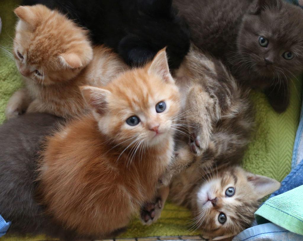 Много разноцветных котят