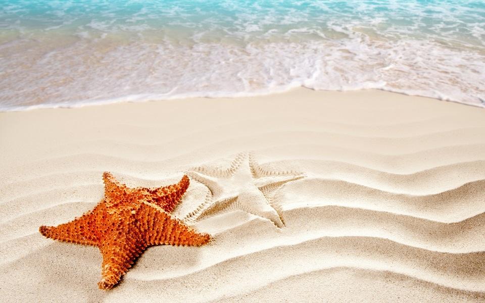 Морская звезда на белом песке