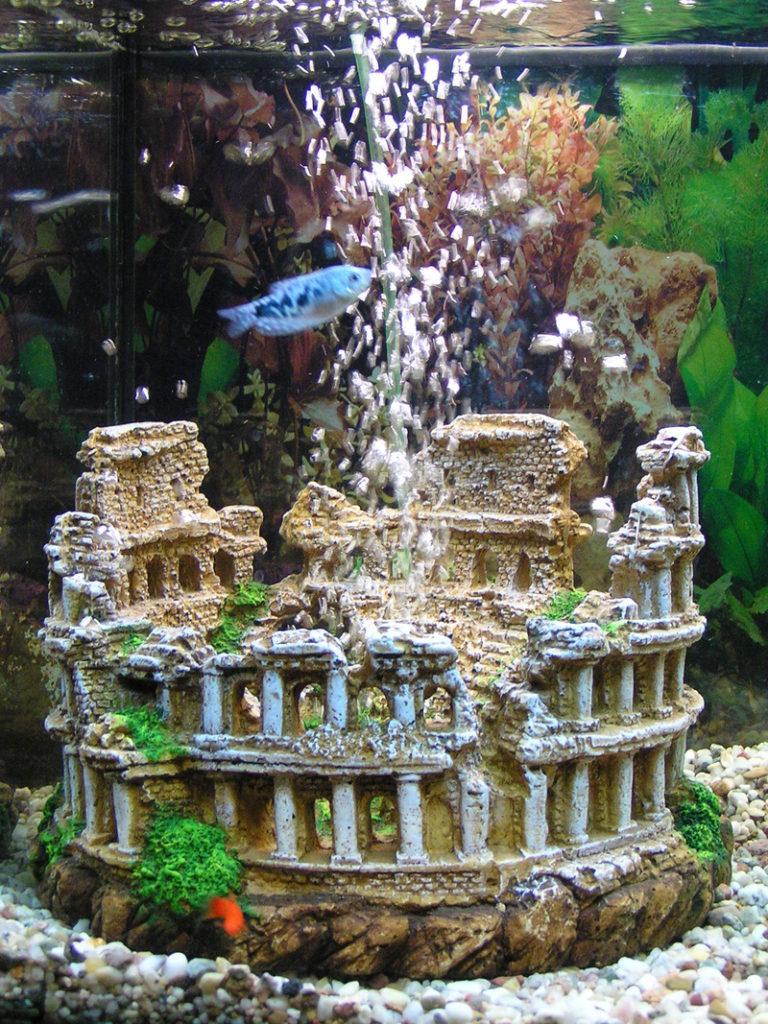 Мраморный гурами плавает в аквариуме