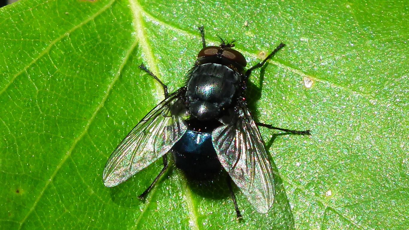 Поиск секса с мухами фото