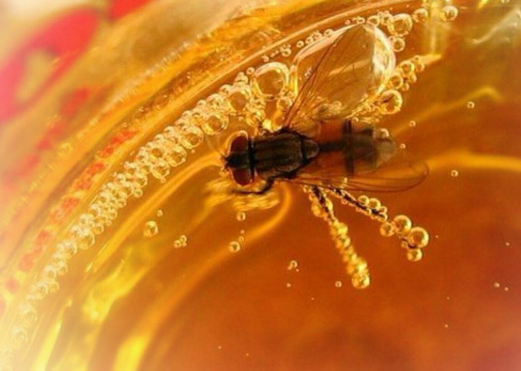 Муха в мёде