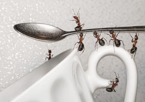 Муравьи на ложке и чашке