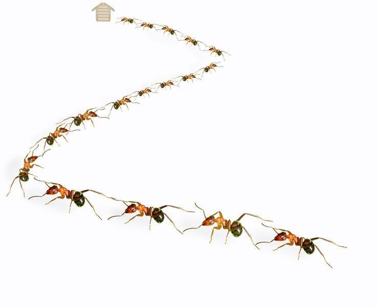 муравьи ползут