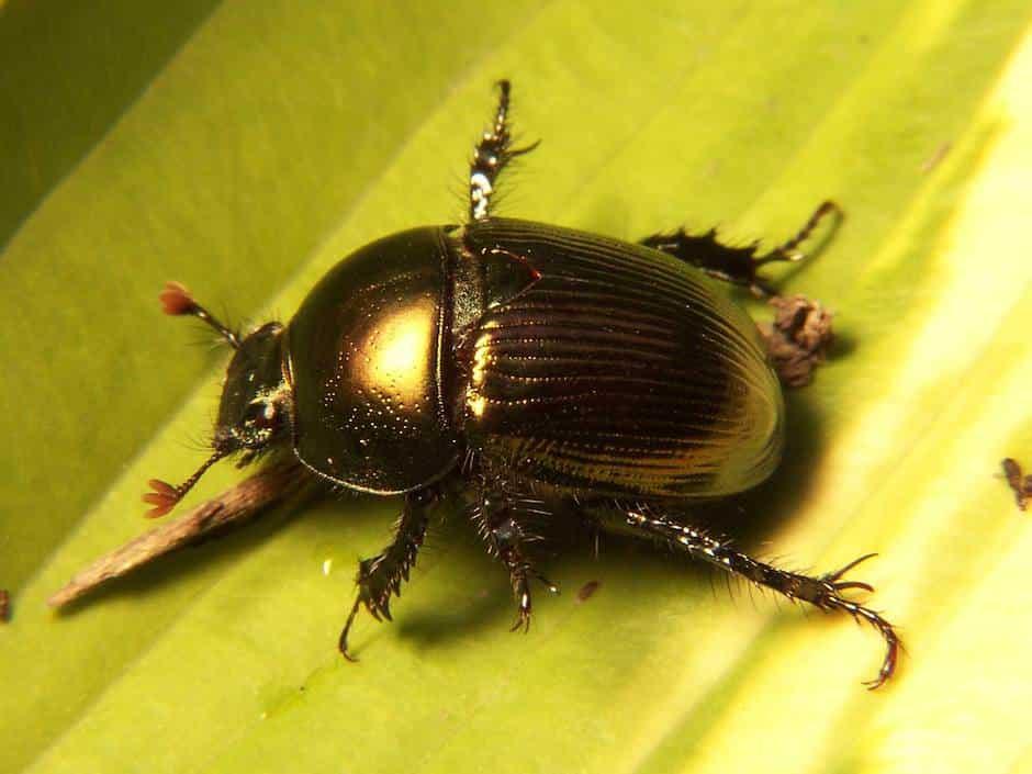 К чему снится желтый жук фото