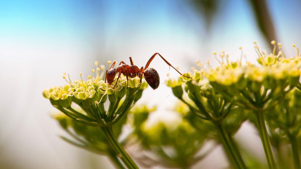 один муравей