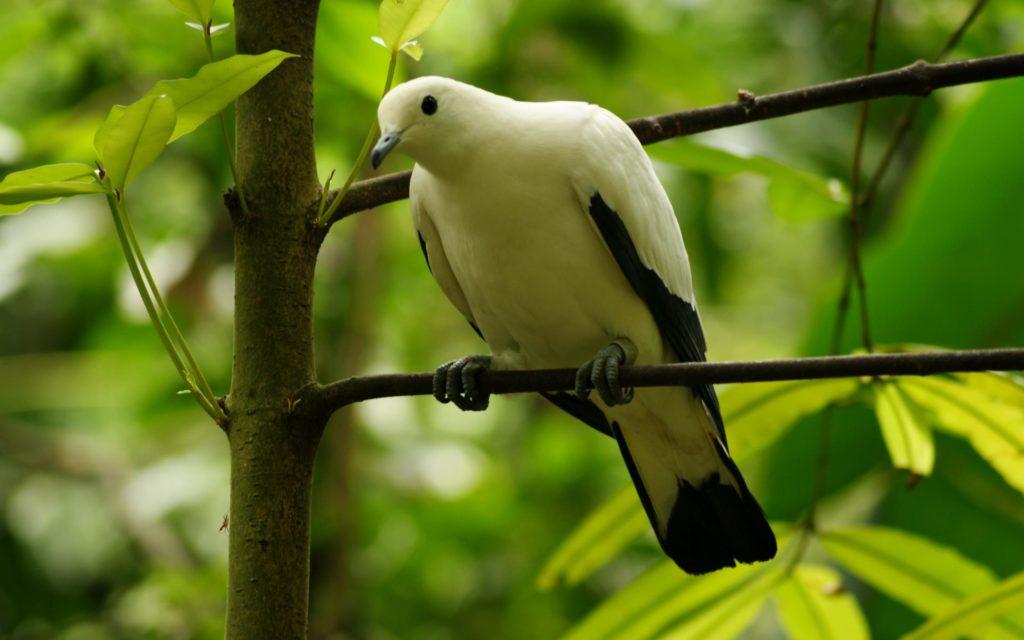 Одинокий голубь на дереве
