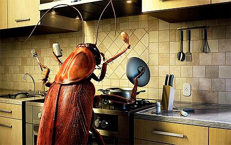 Огромный таракан хозяйничает на кухне