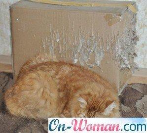 кошка дерет стены и обои