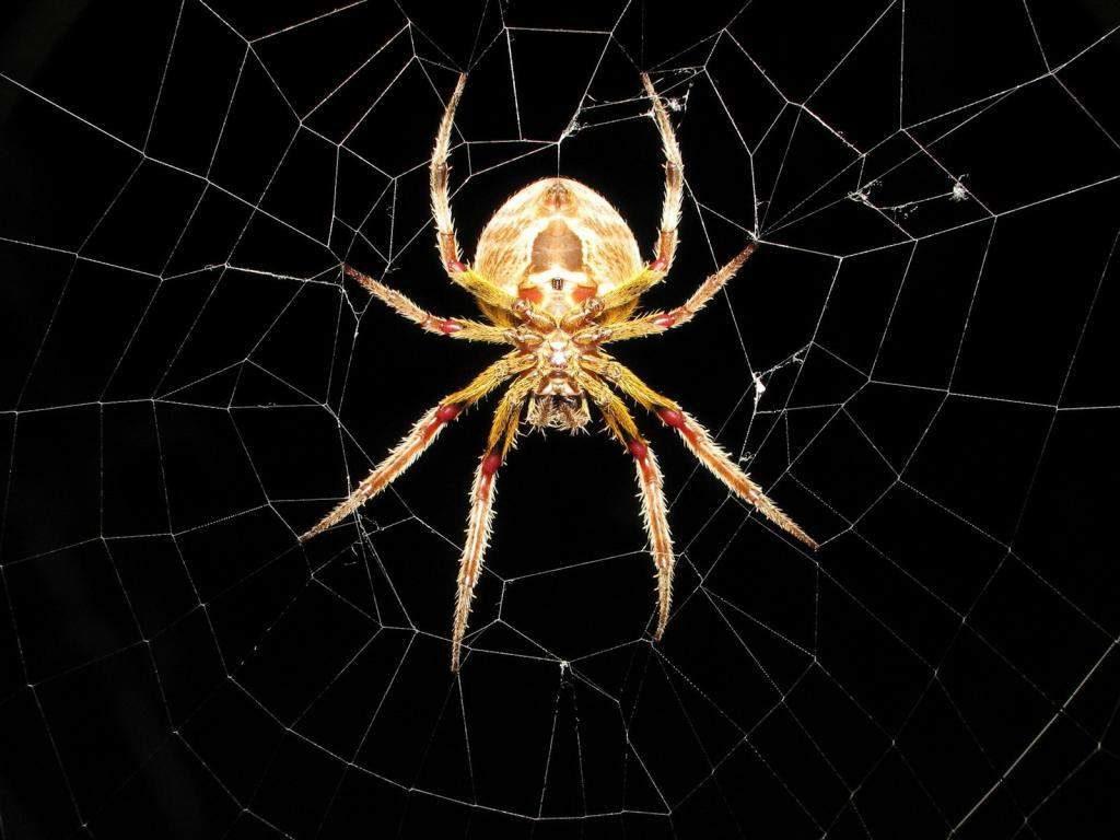 Паук в центре паутины