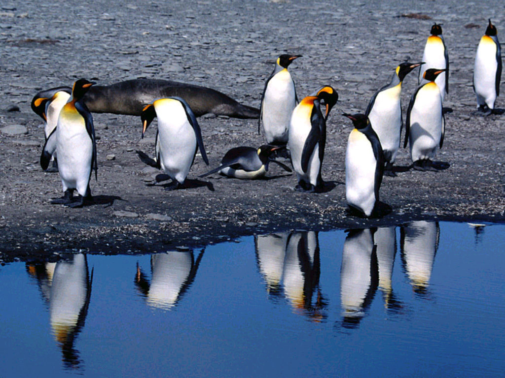 Пингвины около воды
