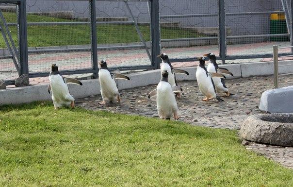Пингвины в открытом вольере