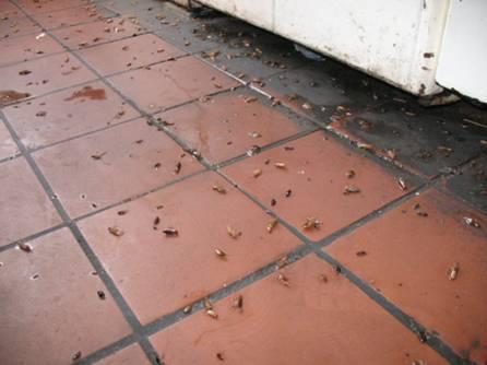 Пол с рыжей плиткой в тараканах