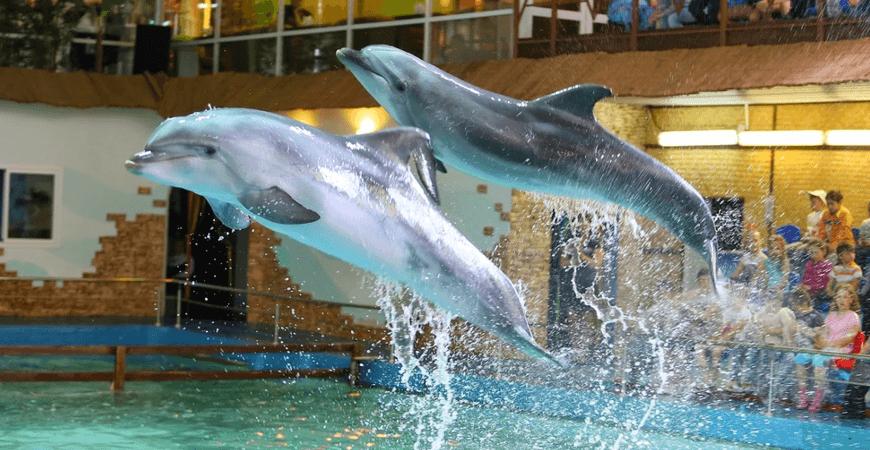 Дельфинарий Ярославля