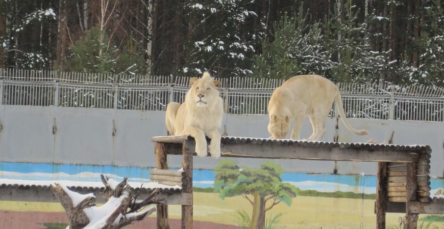 Зоопарк Ярославля