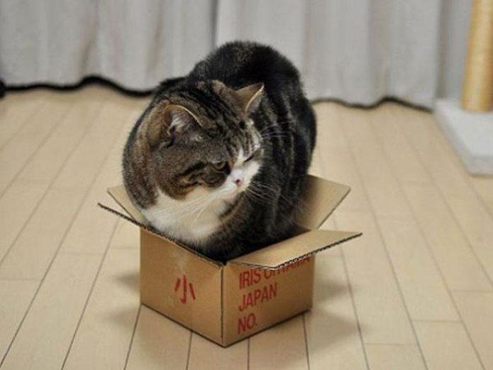 Кот не помещается в коробку