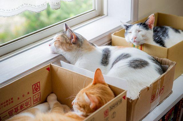 Коты в коробках нежатся на солнце