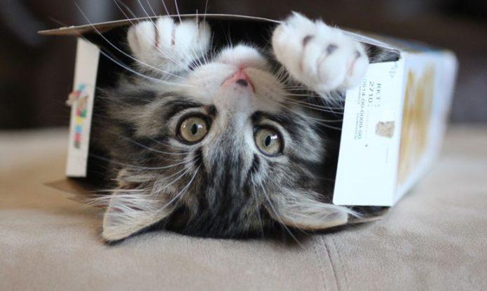 Кот любит забавляться с коробкой