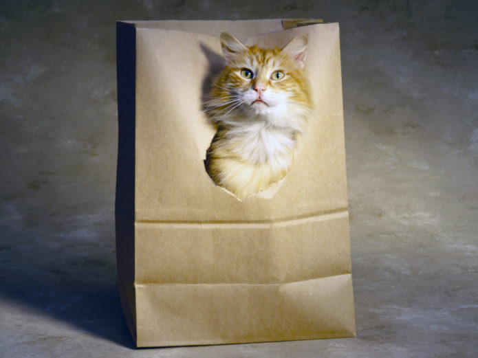 Кот высовывается из бумажного пакета